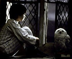 harry potter con su lechuza